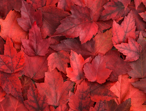 Ways to Enjoy Fall While Staying Safe